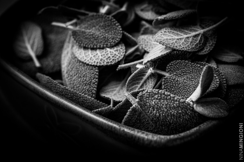 black and white photo of sage by Nina Mingioni