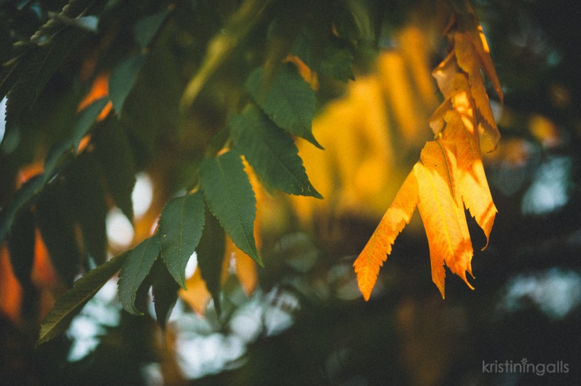 green and yellow leaves by Kristin Ingalls