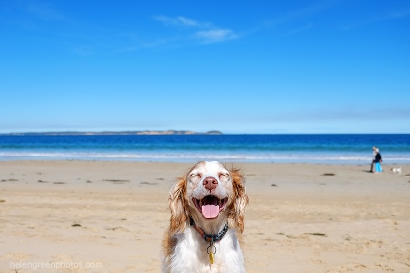 happy-centered-dog-oblivious-to-background-by-helen-green