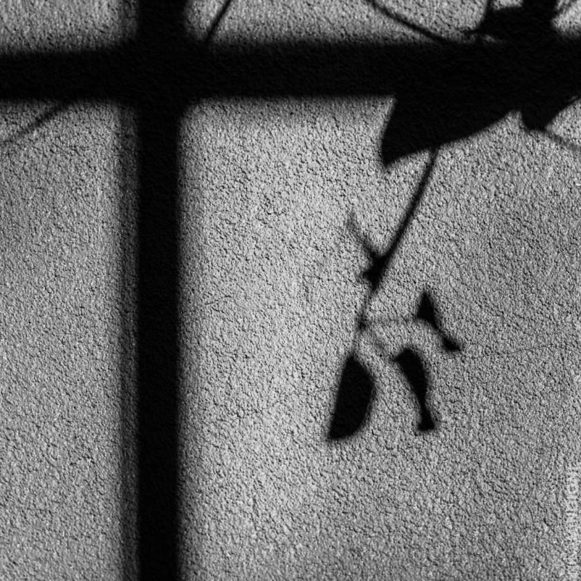 shadow of a leaf by Nina Mingioni