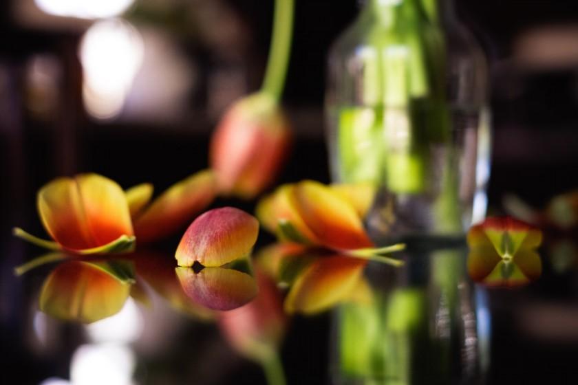 tulips by Lisa Benemelis