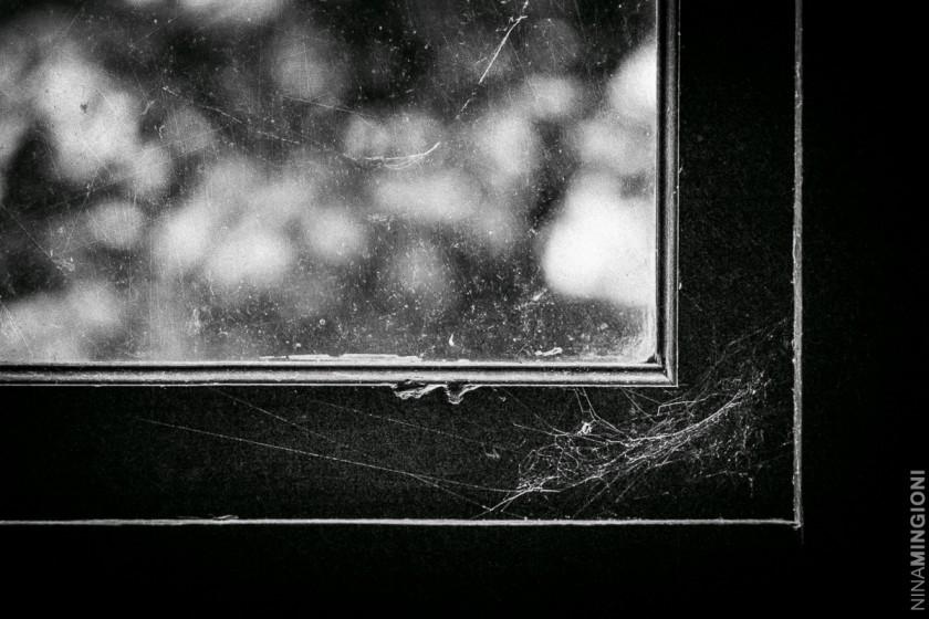 window with cobwebs by Nina Mingioni