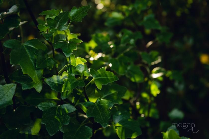 1 Dappled light plants by photographer Megan Cieloha