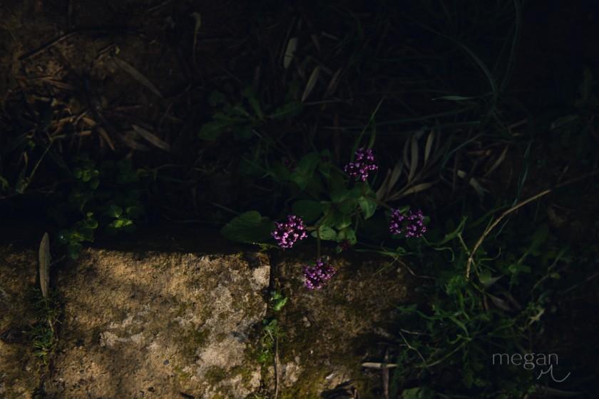 http://www.clickinmoms.com/blog/wp-content/uploads/2015/07/2-Dappled-light-flowers-by-photographer-Megan-Cieloha.jpg