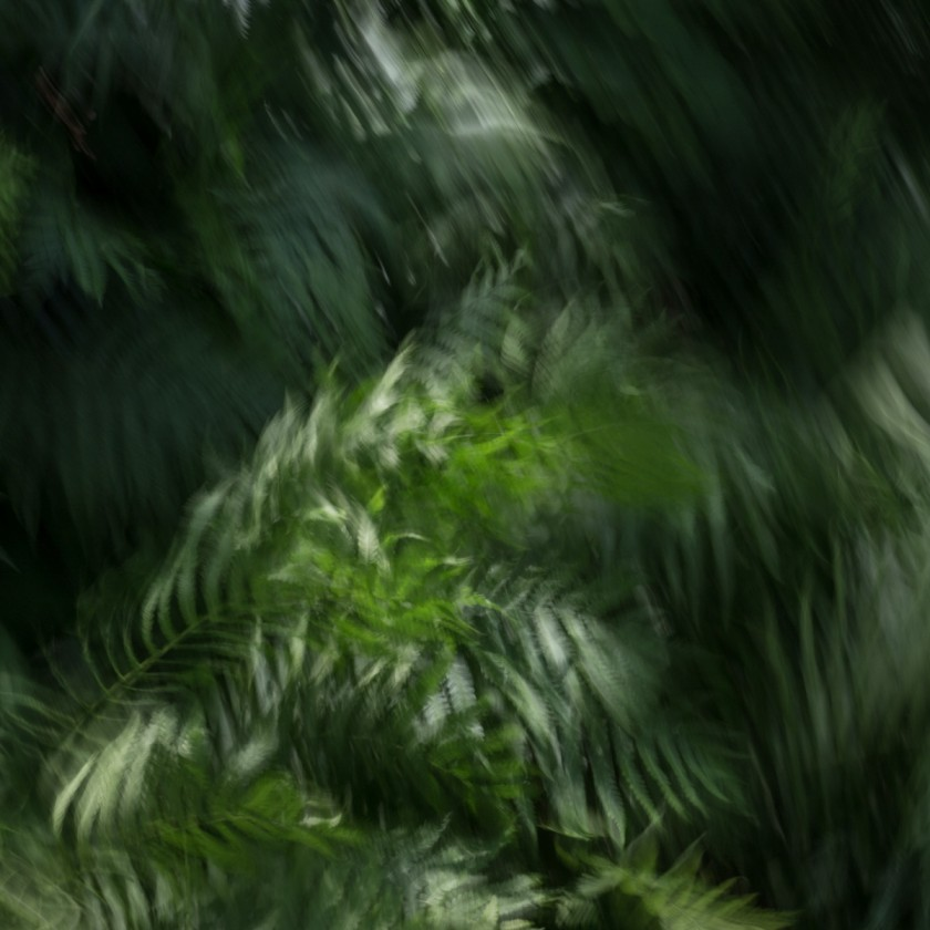 green foliage in motion photograph by Anna VanDemark