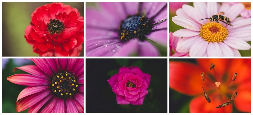 macro flower photos by Courtney Rust of Rusty Lens Photography