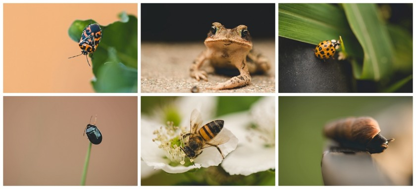 yard bugs and pets by Courtney Rust of Rusty Lens Photography