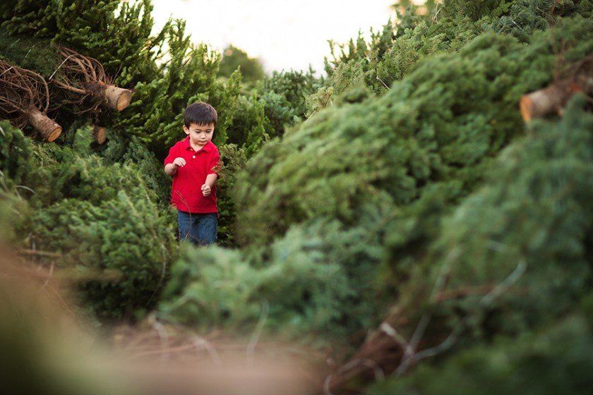 boy standing in a Christmas tree farm lot by Vironica Golden