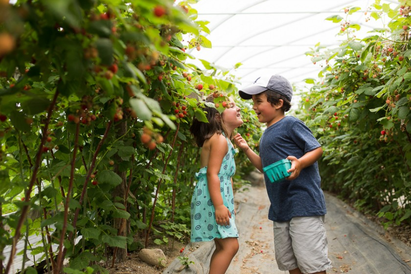 kids picking berries photo by Kristy Dooley