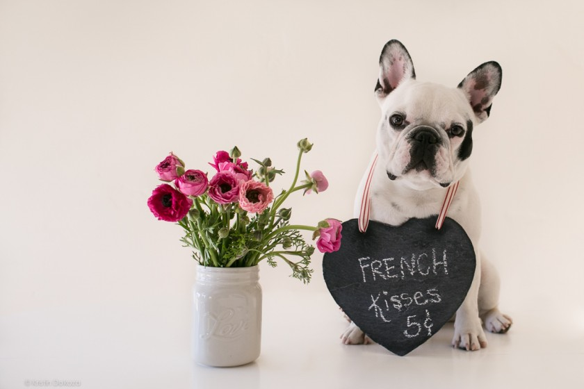 picture of a dog giving away kisses by Kristin Dokoza