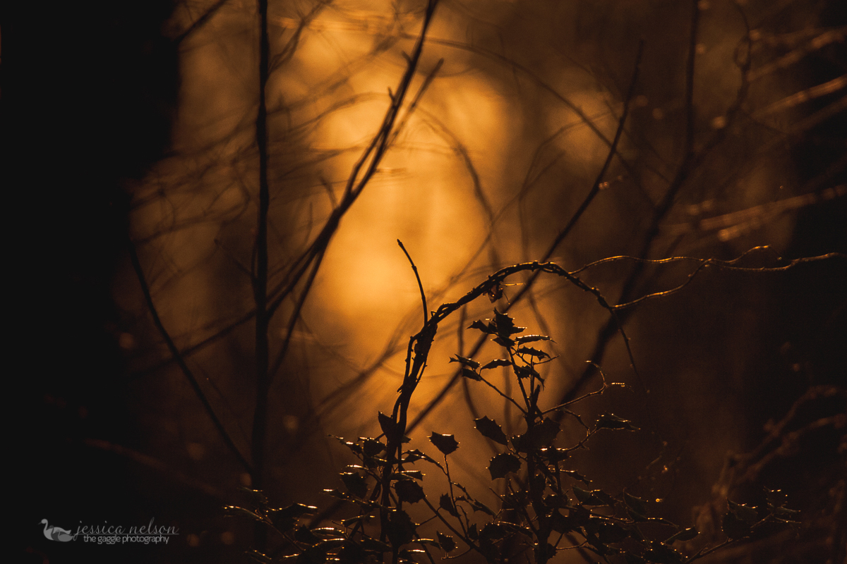 backlit picture of a tree by Jessica Nelson