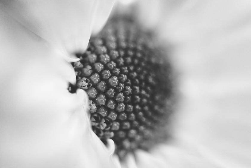 macro photo of flower by Tiffany Kelly