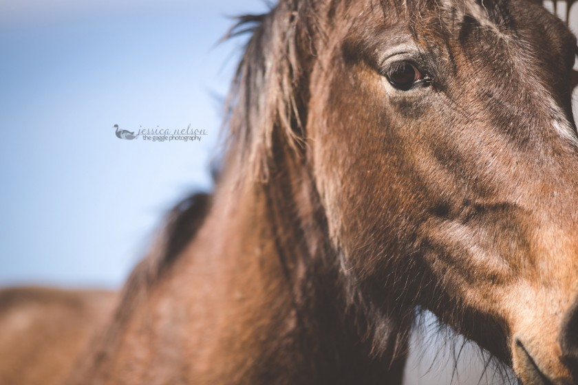 photo of a brown horse by Jessica Nelson