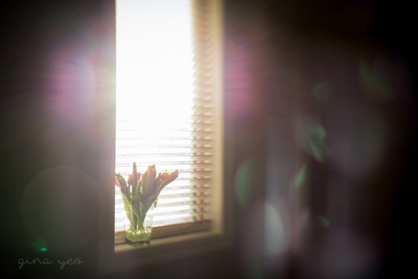 photo of tulips in a window with lots of lens flare by Gina Yeo
