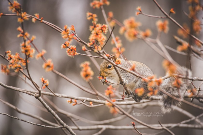 picture of a squirrel in a tree by Jessica Nelson