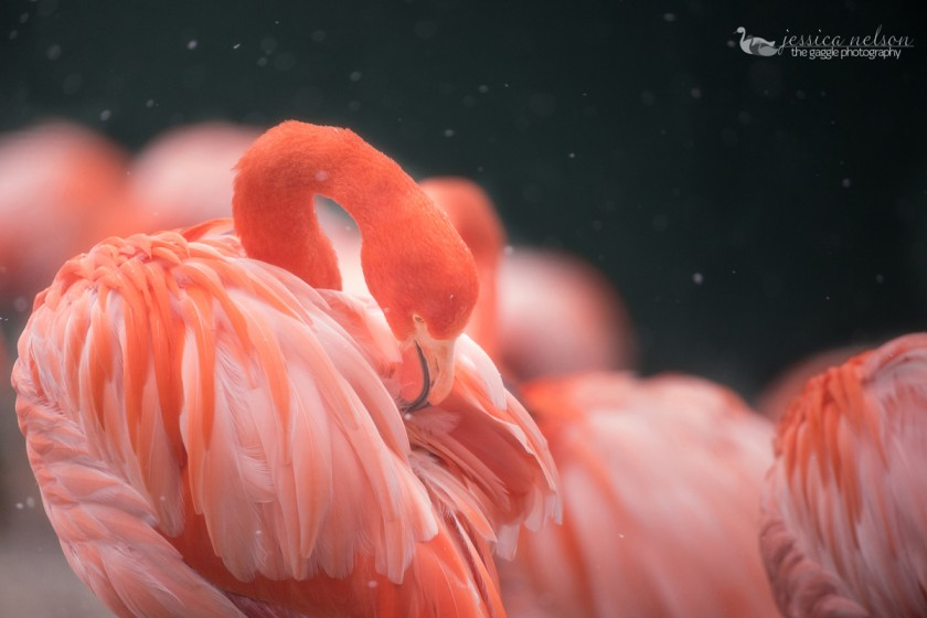 picture of flamingos by Jessica Nelson
