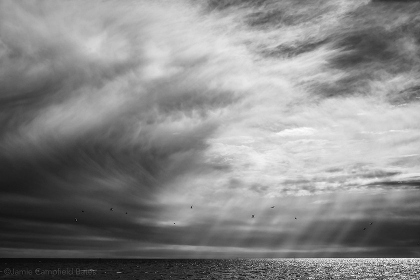 black and white photo of birds flying over the water by Jamie Bates