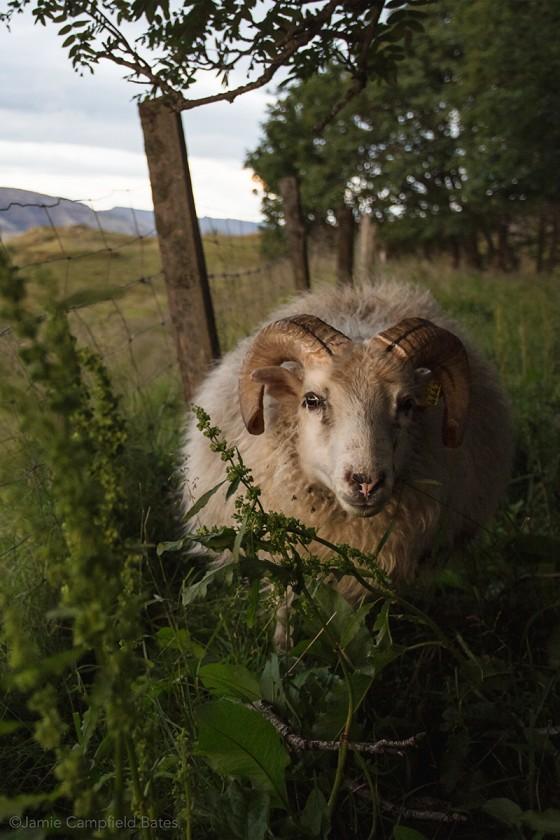 close up photo of animal by Jamie Bates