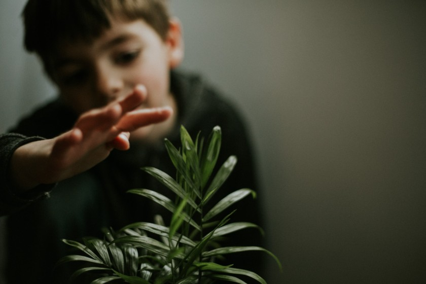 photo of boy touching green plant by Cassandra McCasley of Twist and Shutter Photography