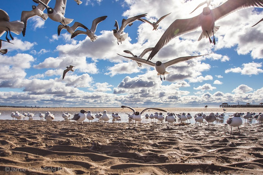 photo of lots of birds on the beach by Jamie Bates