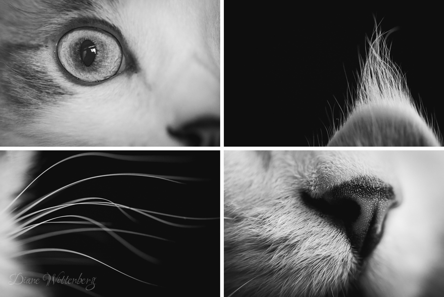 Cat-Macro-Creative-Photography-Series-by-Photographer-Diane-Wittenberg