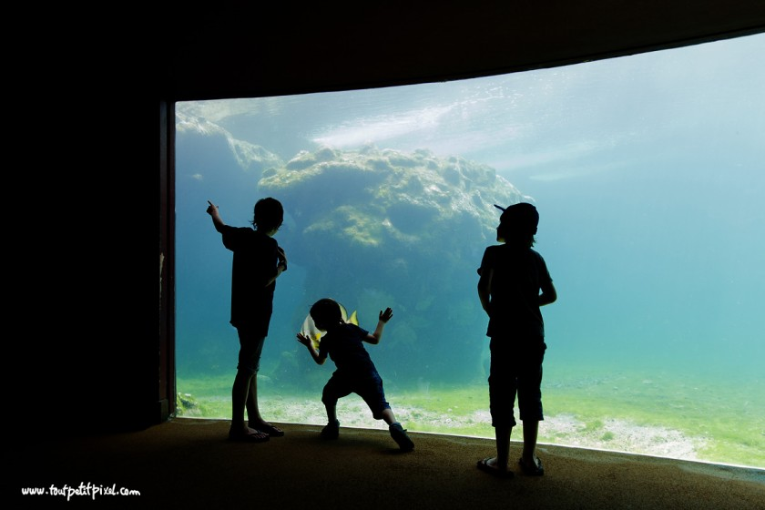 silhouette of kids looking in a fish tank by Lisa Tichane