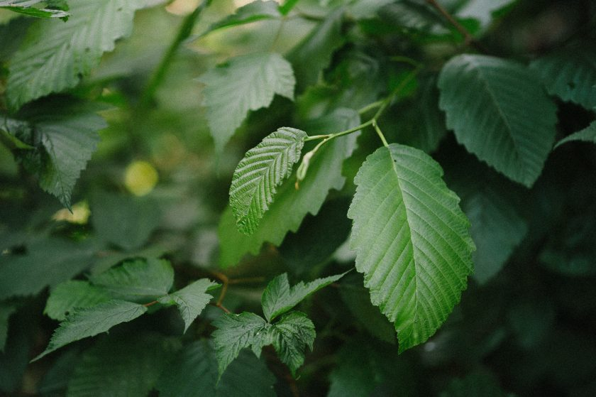 before photo of green leaves by Ebony Logins