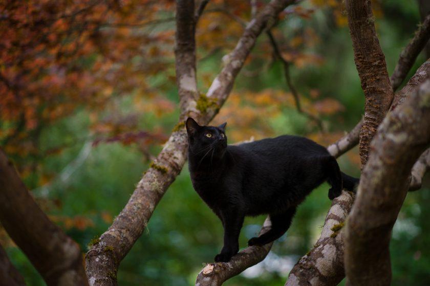 photo of a black cat in a tree by Ebony Logins