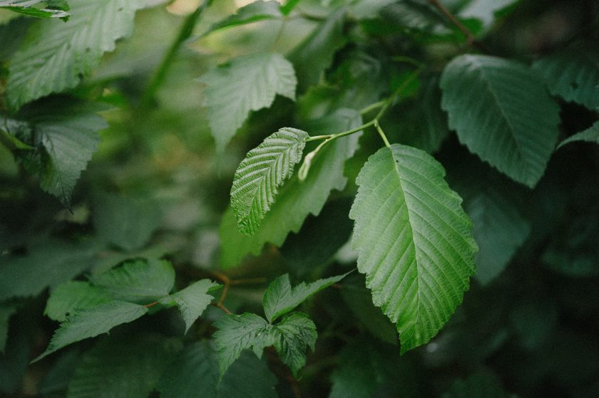picture of green leaves by Ebony Logins