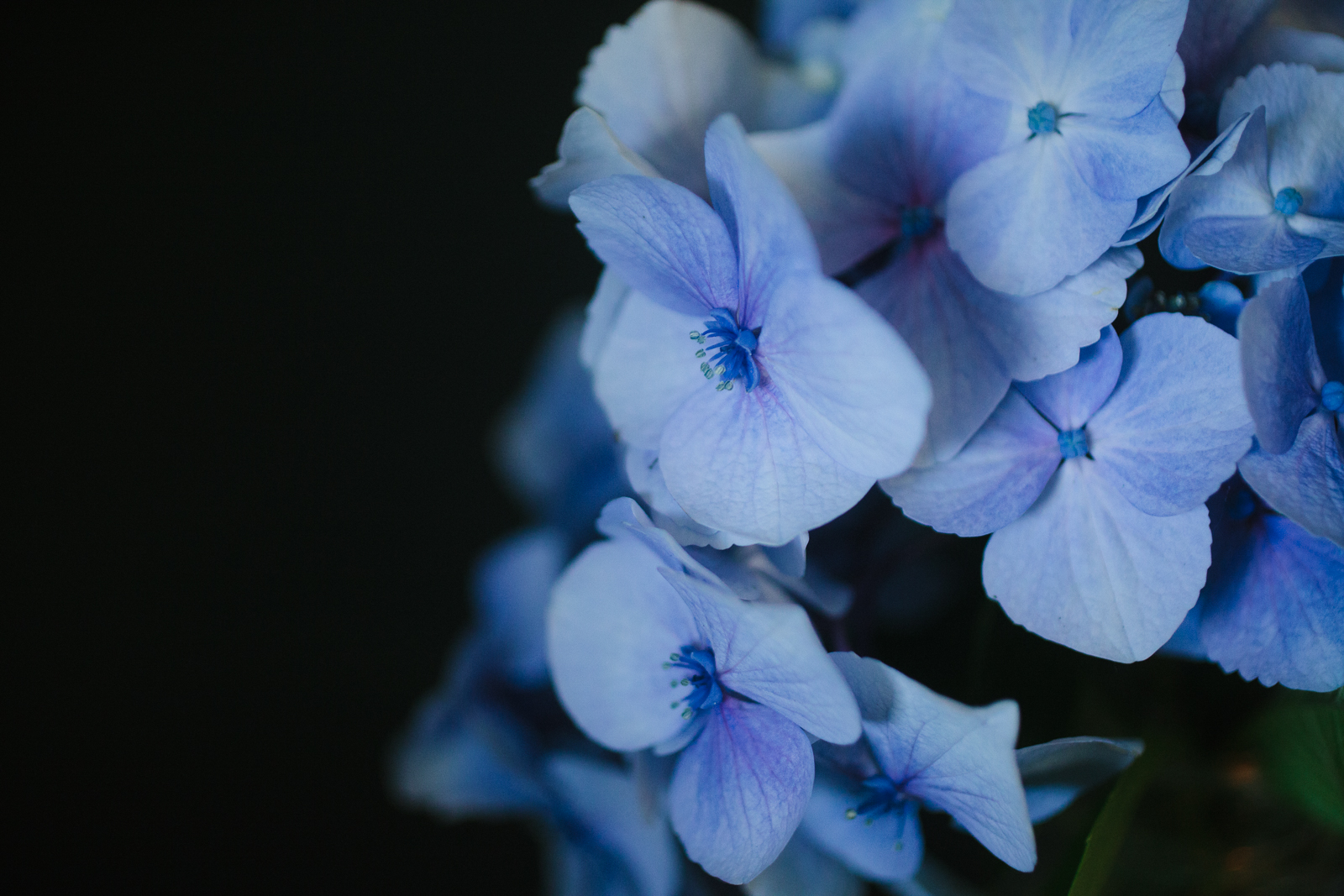 close up picture of a blue flower by Meghan McMackin