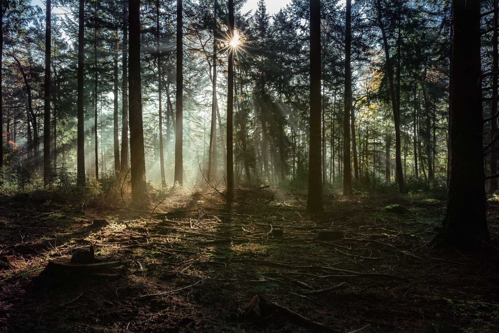 photo of woods with pretty light and a starburst by Anita Perminova