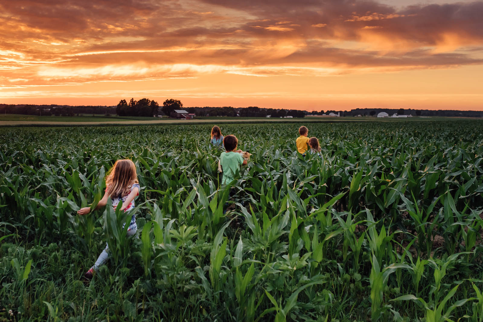 picture o fkids running through a field at sunset by Susan Grimes