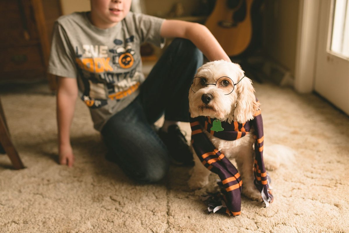 picture of dog dressed like Harry Potter by Angee Manns