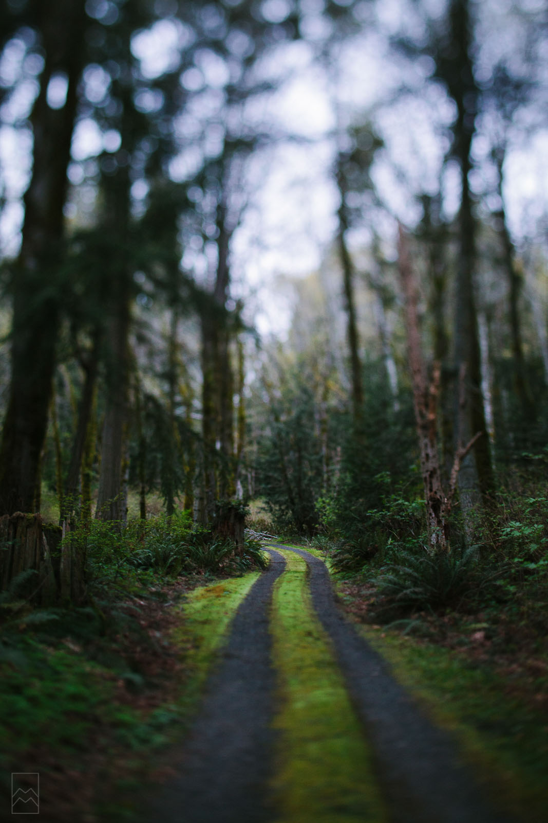 tilt-shift photo of a path in the woods by Meghan McMackin