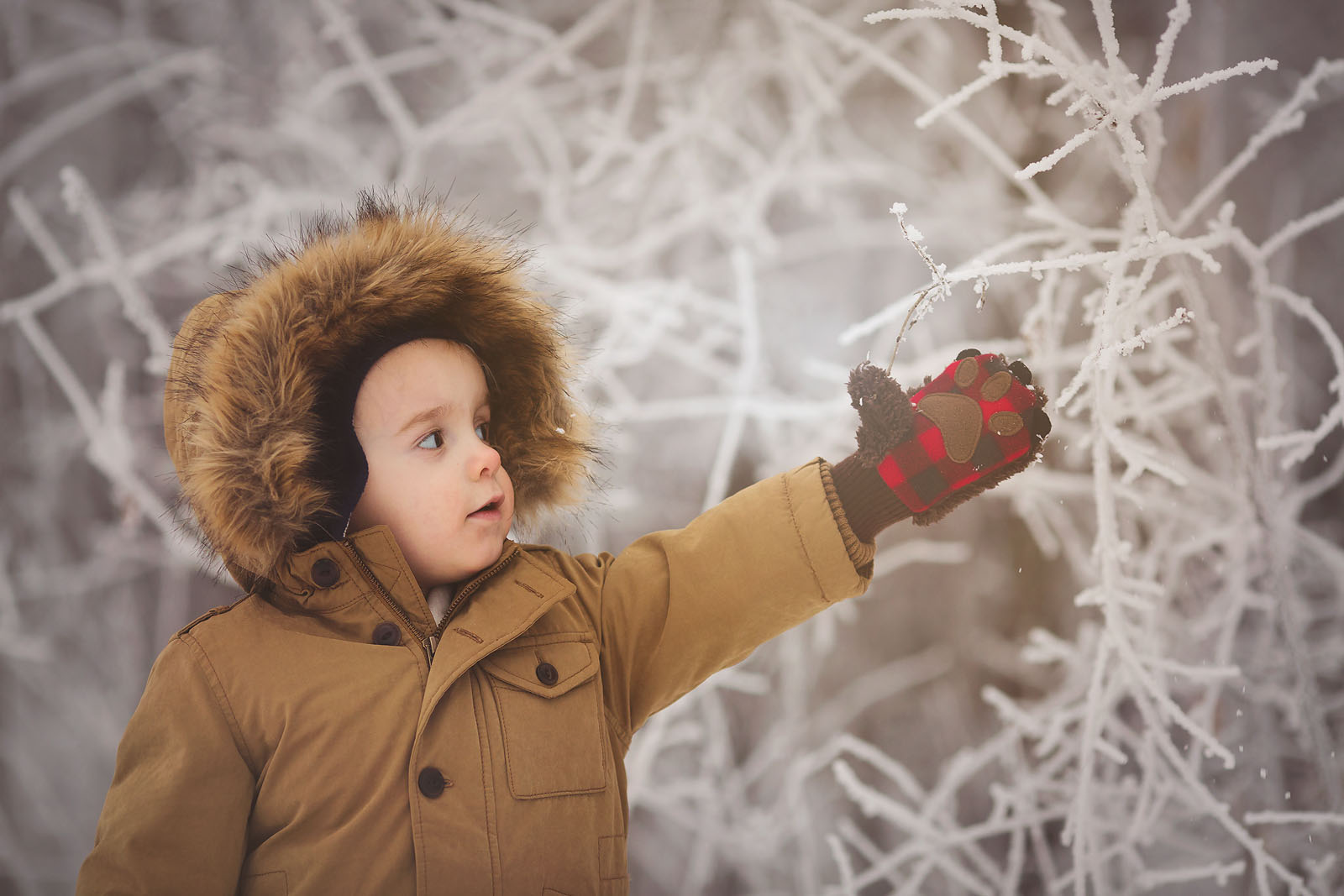 photo of boy reading for a snow covered branch by Amber Walder