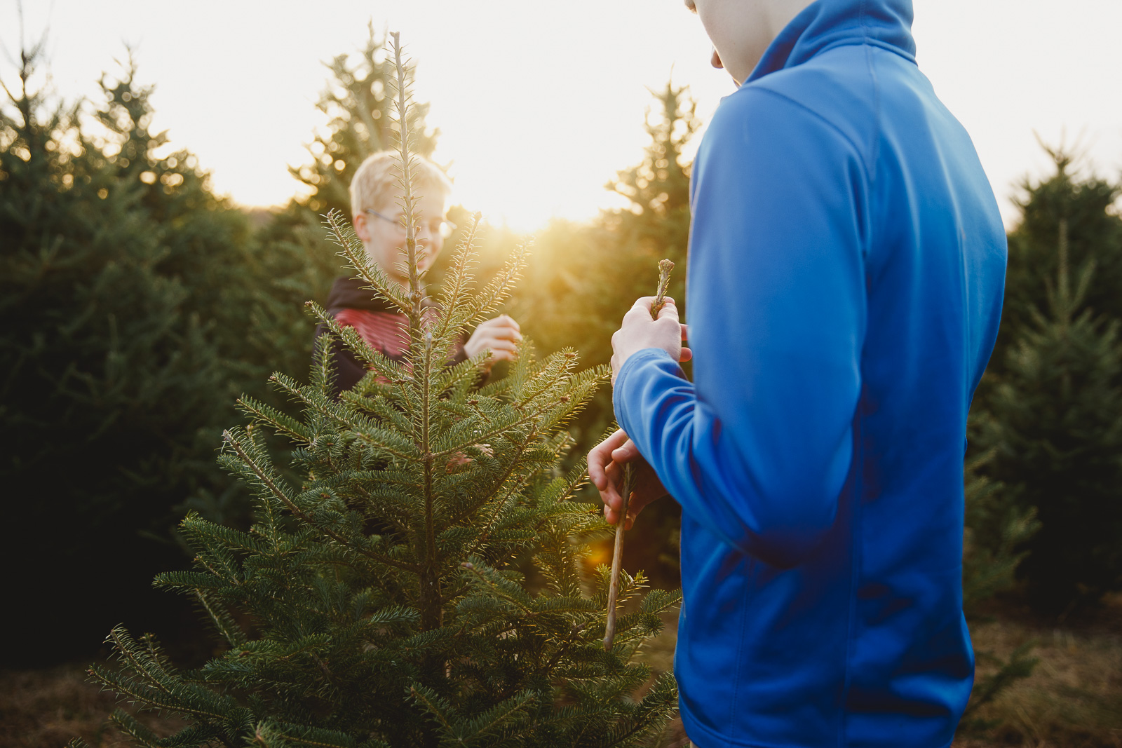photo of boys with a Christmas tree by Amy Nowak