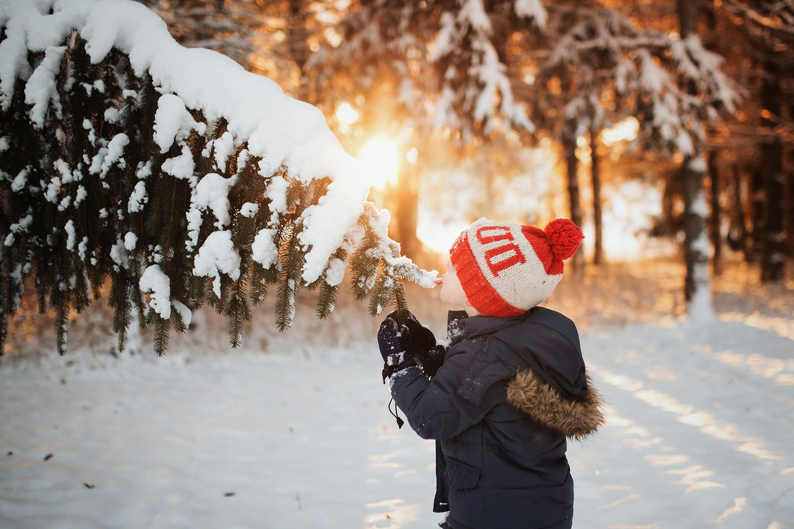 backlit picture of boy eating snow of a branch by Meg Loeks