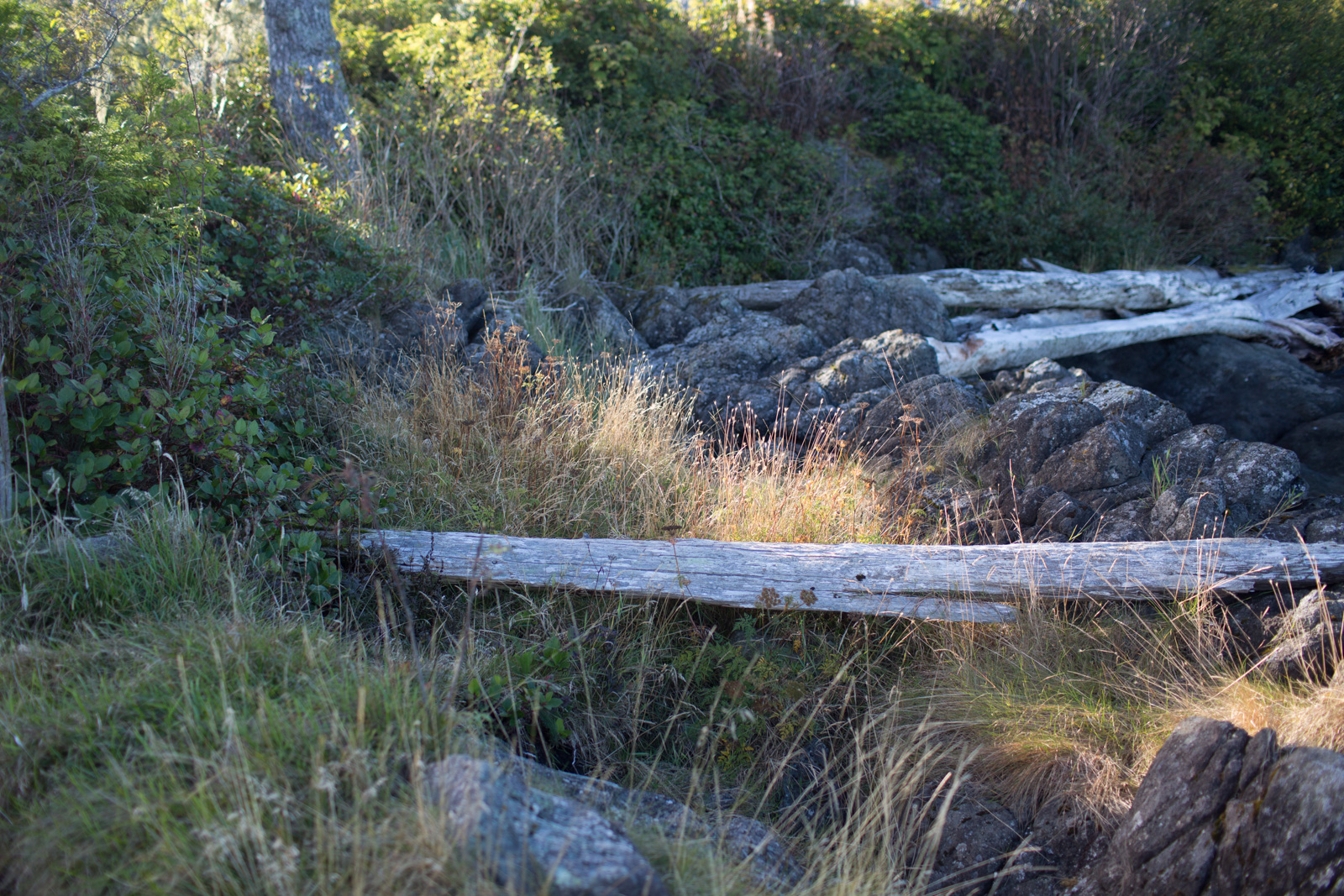 photo location pullback with giant log by Cassandra Casley