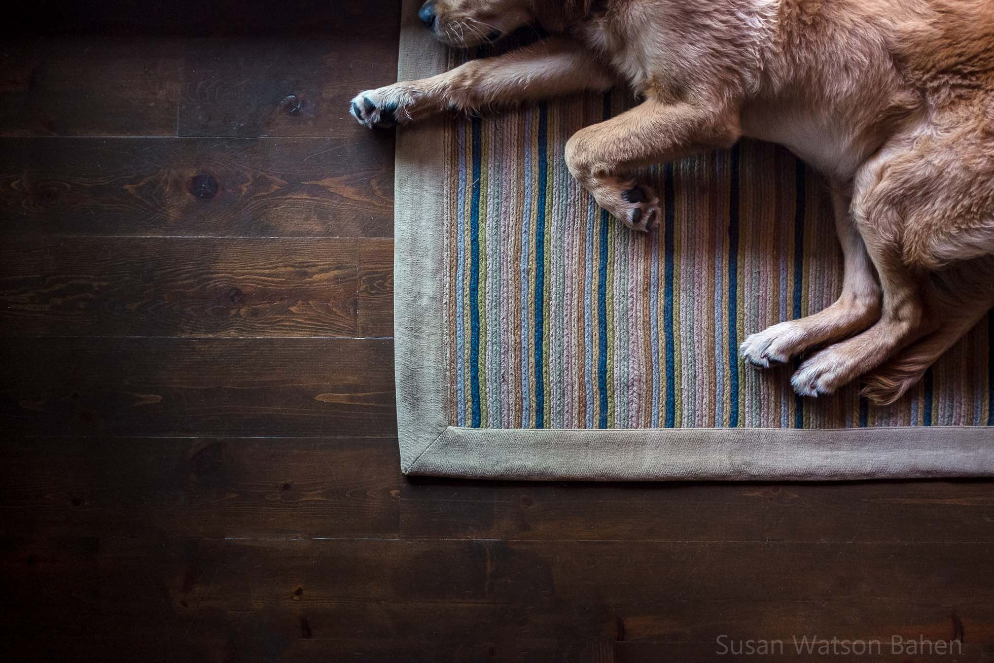 photo of dog sleeping on a rug by Susan Bahen