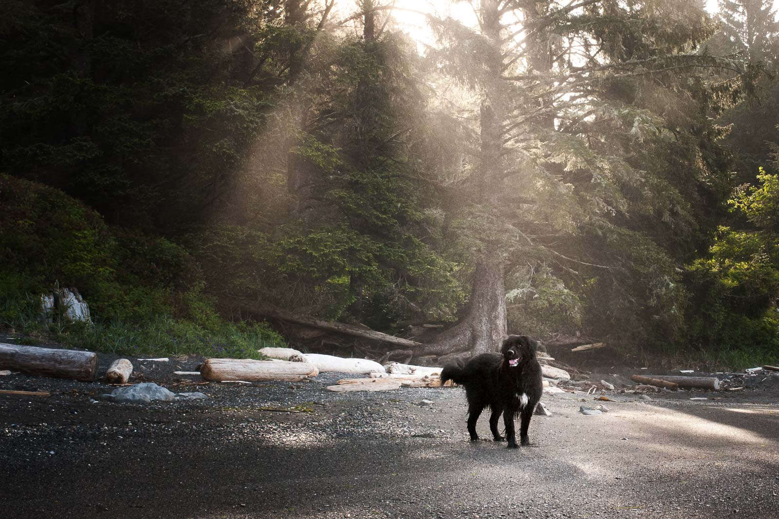 a dog in the woods at sunrise by Ebony Logins