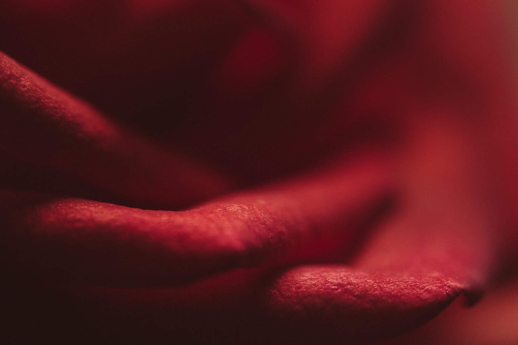 macro photo of red flower by Ebony Logins