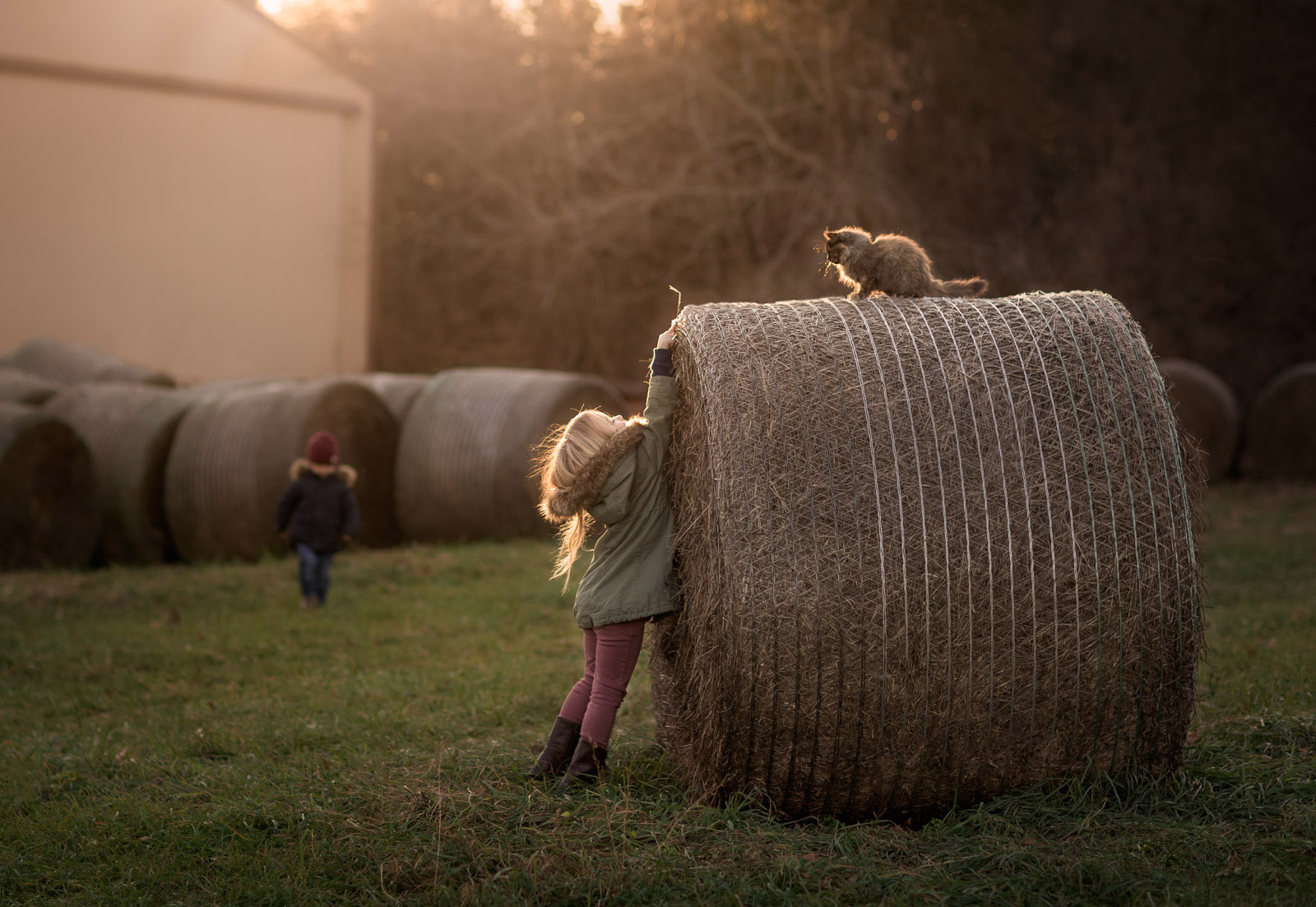 photo of girl reaching for a cat on a bail of hay by Danielle Awwad