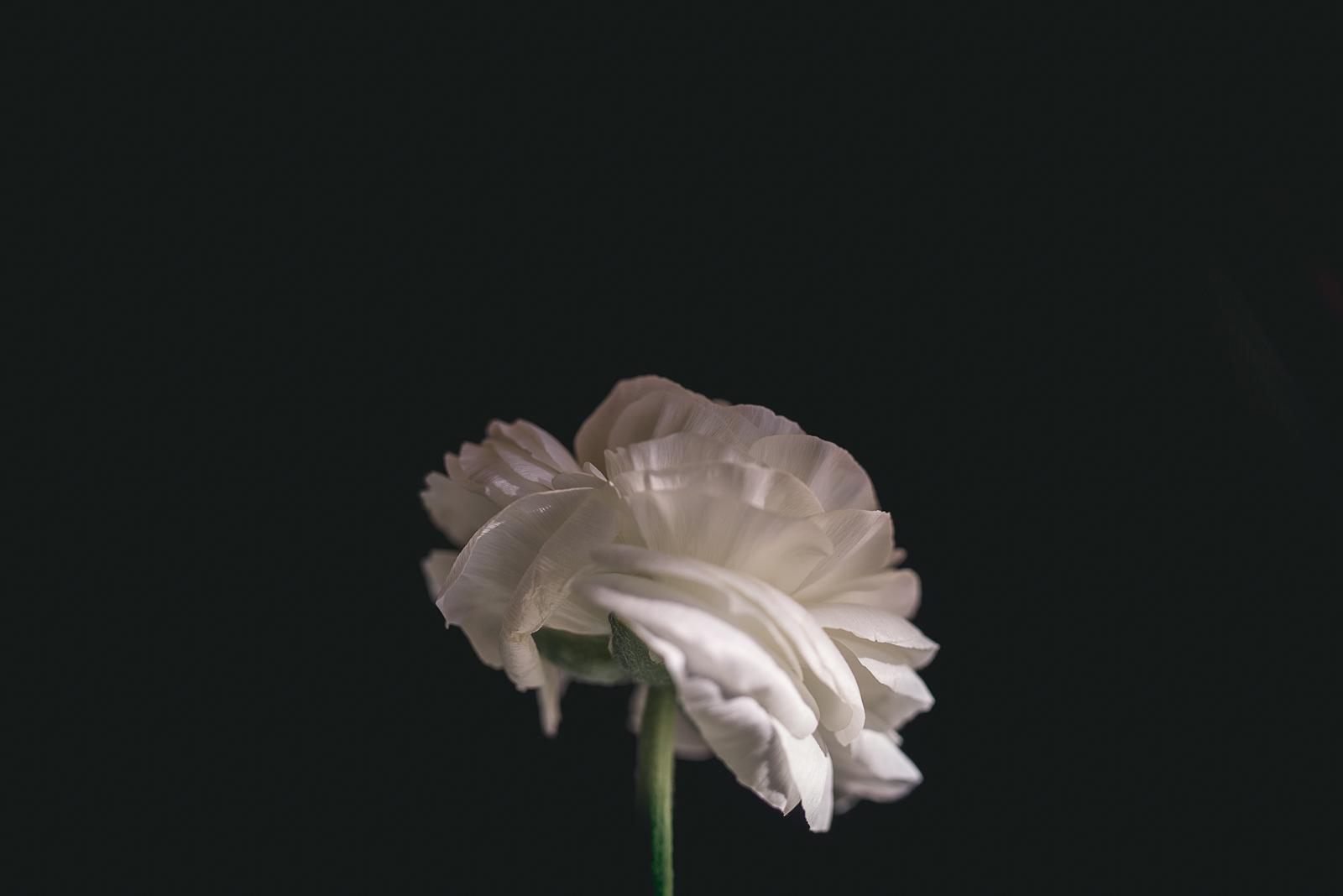 floral photograph by Elle Walker