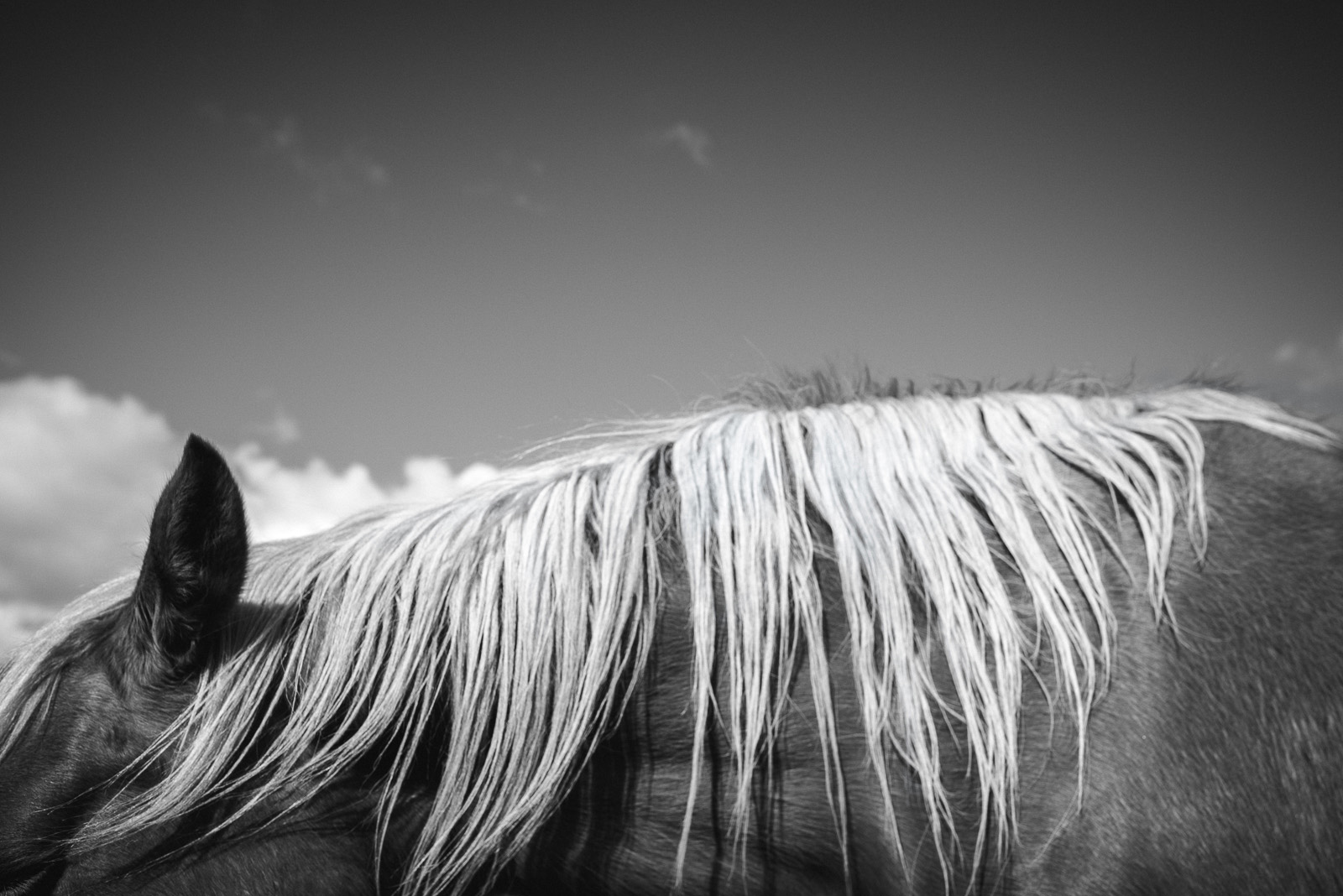 photo of a horses mane by Elle Walker