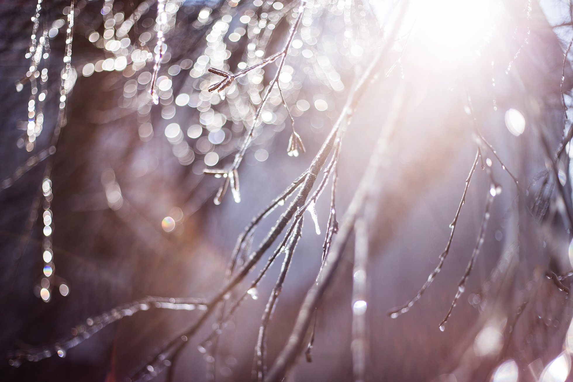 ice-covered-branches-with-light-chanel-french-50mm-lens