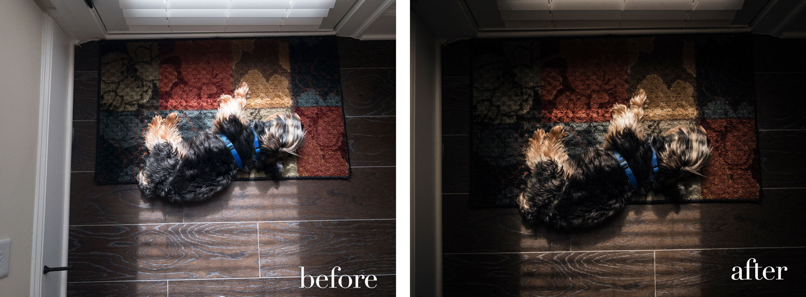 Mobile-Photo-Tips4-dog-curled-up-by-door-in-sunlight-before-and-after-chanel-french