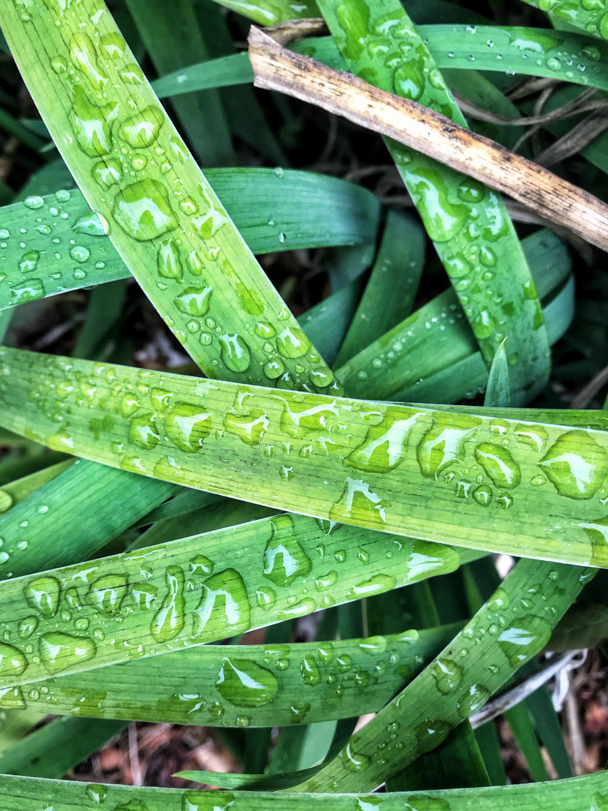Mobile-Photo-Tips6-blades-of-grass-with-dew-on-them-chanel-french