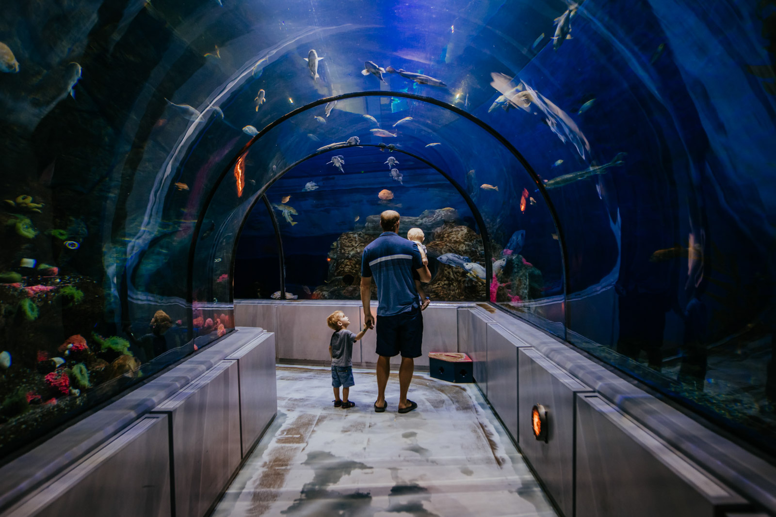 aquarium tunnel magic family dad children toddler babyphotographer annick simon photographes paradis documentaires quebec