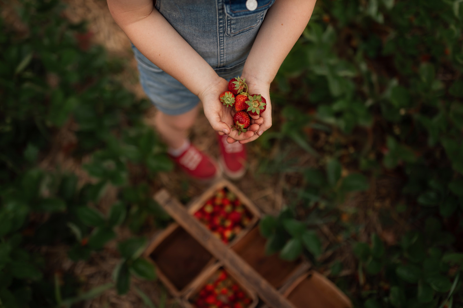 color theory child hands holding strawberries meg loeks