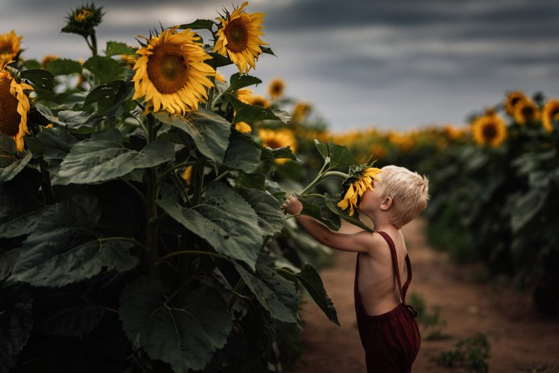color theory child looking up at sunflowers meg loeks